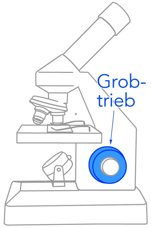 Der Grobtrieb am Mikroskop