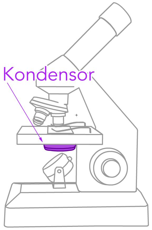 Der Kondensor am Mikroskop