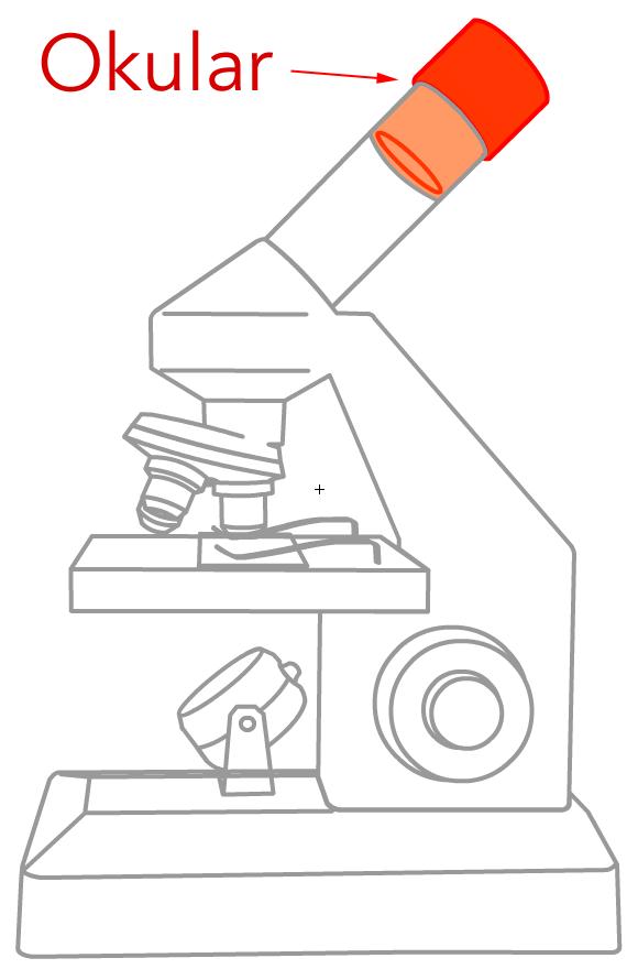mikroskop objektive. Black Bedroom Furniture Sets. Home Design Ideas