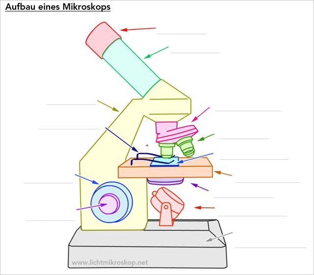Aufbau Mikroskop Arbeitsblatt