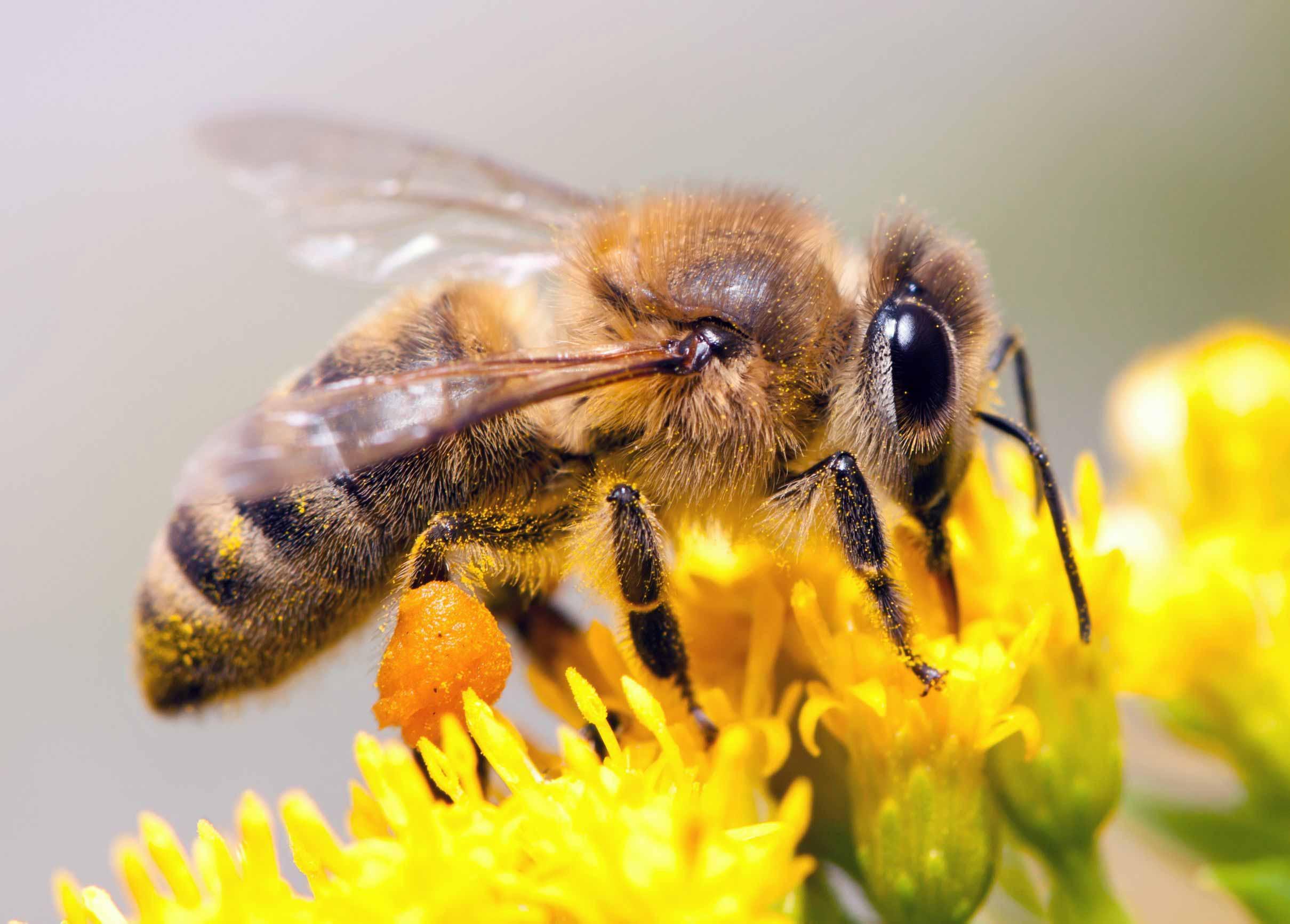 Weltbienentag - Rettet die Bienen!
