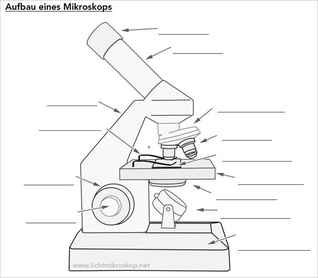 Mikroskop Arbeitsblatt ohne Beschriftung