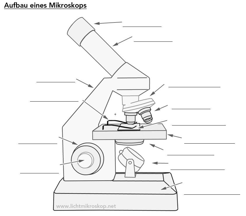 Lichtmikroskop Aufbau (Arbeitsblatt)