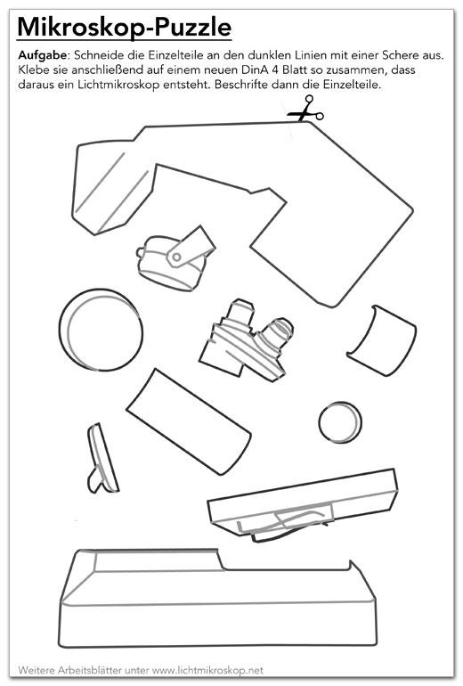 mikroskop puzzle arbeitsblatt. Black Bedroom Furniture Sets. Home Design Ideas