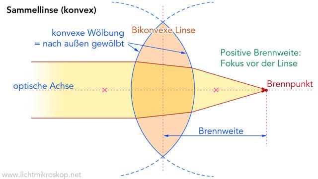 Sammellinse (konvex) - Quelle: lichtmikroskop.net