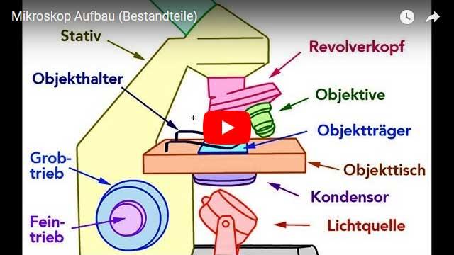 Das Mikroskop - Lichtmikroskop.net